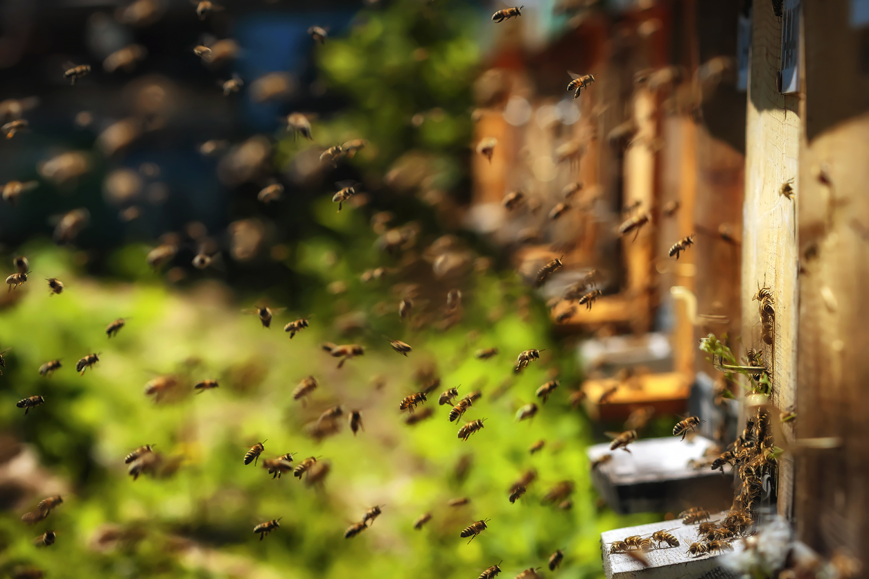 What Do Honey Bees and Bridgewater Associates Have in Common?
